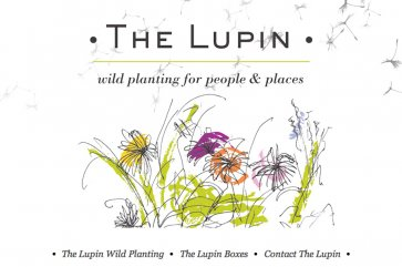 The Lupin